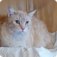 Adopt A Pet :: Ben - Monterey, VA