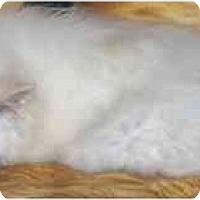 Adopt A Pet :: Moe - Toronto/Etobicoke/GTA, ON