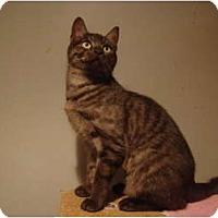 Adopt A Pet :: Macy--PETSMART - Muncie, IN