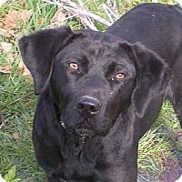 Adopt A Pet :: TOBY-LOVING*PLAYFUL* - Bluff city, TN