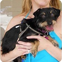Adopt A Pet :: Emma - Kingwood, TX