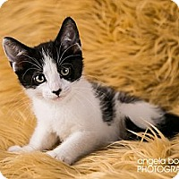Adopt A Pet :: Jackie - Eagan, MN