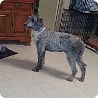 Adopt A Pet :: ABBY - Bowie, TX