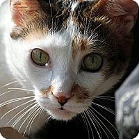 Adopt A Pet :: Zoya - Alexandria, VA