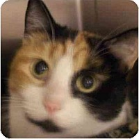 Adopt A Pet :: Macy - Annapolis, MD