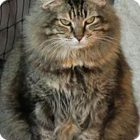 Adopt A Pet :: DAFFODIL - Crescent City, CA