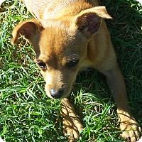 Adopt A Pet :: Molly - Andrews, TX