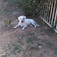 Adopt A Pet :: Louis - Mesa, AZ
