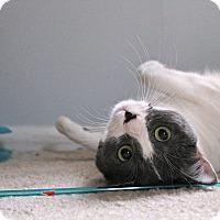Adopt A Pet :: Dinah - St. Louis, MO