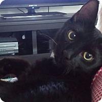 Adopt A Pet :: Harley - Ocala, FL