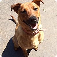 Adopt A Pet :: Scarlette in CT - Manchester, CT
