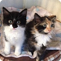 Adopt A Pet :: LAURIE aka Chloe - Hamilton, NJ