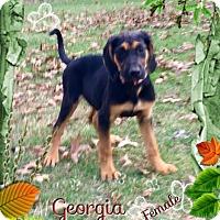 Adopt A Pet :: Georgia meet me 11/18 - Manchester, CT