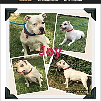 Adopt A Pet :: joy - Homestead, FL