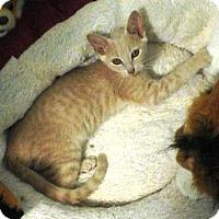 Adopt A Pet :: Nasura- ADOPTED - Somerset, KY