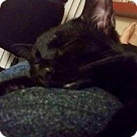 Adopt A Pet :: Elden - Pasadena, CA