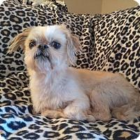 Adopt A Pet :: Tito - Lawrenceville, GA