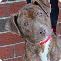 Adopt A Pet :: Sammi - Harrison, NY