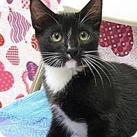 Adopt A Pet :: DEMITRI - Brea, CA