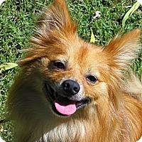 Adopt A Pet :: ACE - Hesperus, CO