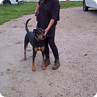 Adopt A Pet :: Alfie - Antioch, IL