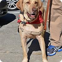 Adopt A Pet :: Grady - Cumming, GA