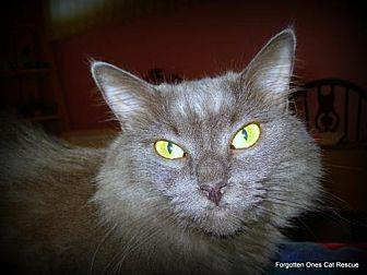 Domestic Mediumhair Cat for adoption in Richmond Hill, Ontario - Smokey