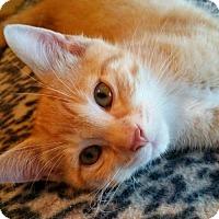 Adopt A Pet :: JOHN - Des Moines, IA