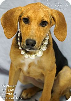 Black and Tan Coonhound Mix Puppy for adoption in Newnan City, Georgia - Tiffany