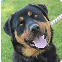 Adopt A Pet :: SASHA - Red Bluff, CA