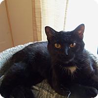 Adopt A Pet :: PHEOBE - Medford, WI