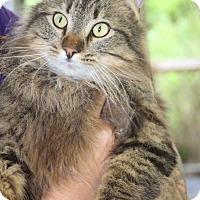 Adopt A Pet :: Scar*Pending Adoption - Columbia, TN