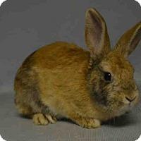 Adopt A Pet :: PEEP - Brooklyn, NY