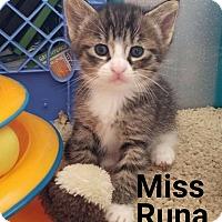 Adopt A Pet :: Miss Runa - Wichita Falls, TX