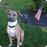 Adopt A Pet :: Quinn - Prospect, CT