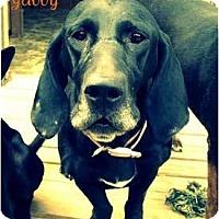 Adopt A Pet :: *Gabby* - Hancock, MI