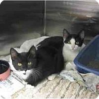 Adopt A Pet :: Bandit & Patches - Greenville, SC
