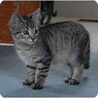 Adopt A Pet :: Ellie Mae - Portland, OR