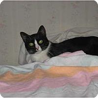 Adopt A Pet :: Bailey - Portland, ME