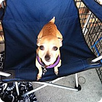 Adopt A Pet :: Devon - North Hollywood, CA