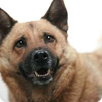 Adopt A Pet :: Ginger - Canoga Park, CA