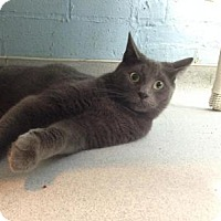 Adopt A Pet :: Blueberry - Oyster Bay, NY