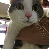 Adopt A Pet :: Nala - Clarksville, TN
