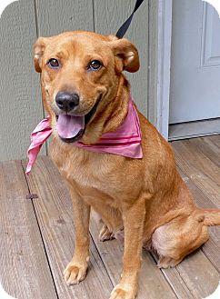 Retriever (Unknown Type) Mix Dog for adoption in Baton Rouge, Louisiana - Mamma Mia