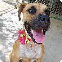 Adopt A Pet :: Stitch - Umatilla, FL