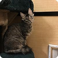Adopt A Pet :: Hope - Riverside, CA