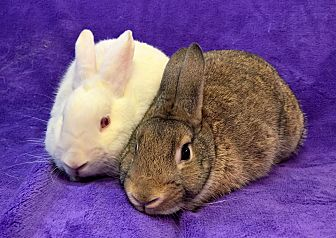 Other/Unknown Mix for adoption in Lewisville, Texas - Casper and Bambi