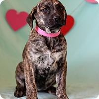 Adopt A Pet :: Elga - Waldorf, MD