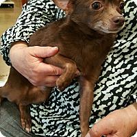 Adopt A Pet :: Clark Kent - Alhambra, CA