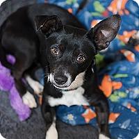 Adopt A Pet :: Lamont - Kanab, UT